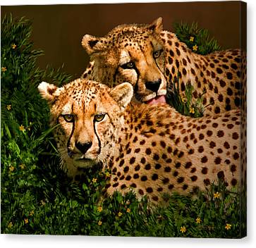 Cheetahs  Canvas Print by Thanh Thuy Nguyen