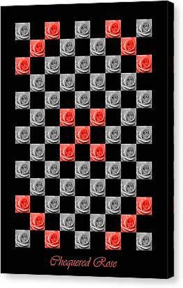 Chequered Rose Canvas Print by Hazy Apple