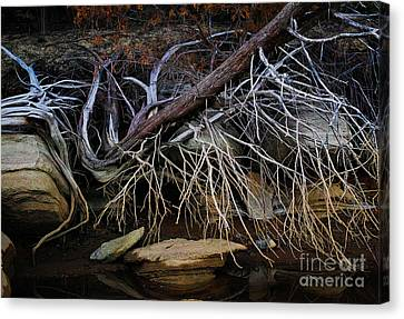 Canvas Print featuring the photograph Cherokee Lake Abstract by Douglas Stucky