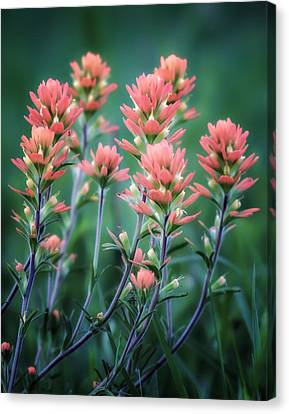 Cherokee Prairie Paintbrush Canvas Print by James Barber