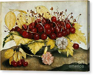 Cherries And Carnations Canvas Print by Giovanna Garzoni