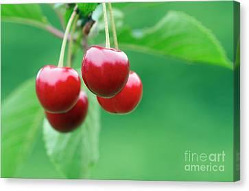 Cherries Canvas Print by Michal Boubin