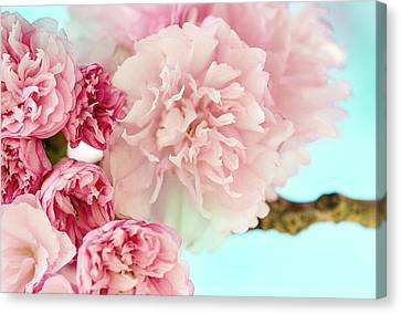 Kwanzan Cherry Canvas Print