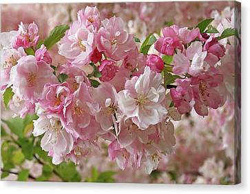 Canvas Print featuring the photograph Cherry Blossom Closeup by Gill Billington