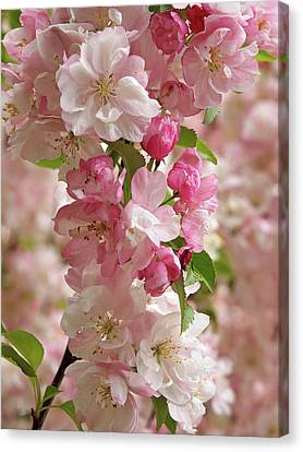 Canvas Print featuring the photograph Cherry Blossom Closeup Vertical by Gill Billington