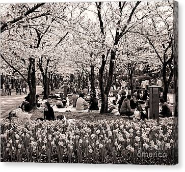 Cherry Blossom Festival Canvas Print by Ari Salmela
