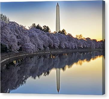 Cherry Blossom Festival - Washington Dc Canvas Print by Brendan Reals