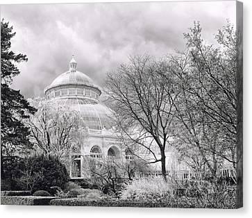 Cherry Blossom Monochrome Canvas Print by Jessica Jenney