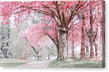Cherry Blossom Path Canvas Print by Charline Xia