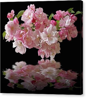 Cherry Blossom Reflections On Black Canvas Print by Gill Billington