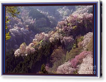 Cherry Blossom Season In Japan Canvas Print