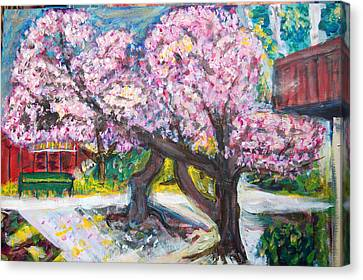 Cherry Blossom Time Canvas Print by Carolyn Donnell