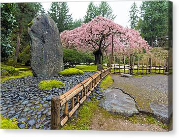 Cherry Blossom Tree By Natural Rock Canvas Print by Jit Lim