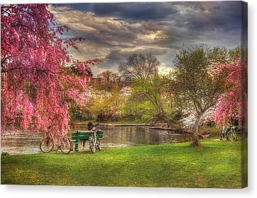 Cherry Blossom Trees On The Charles River Basin In Boston Canvas Print