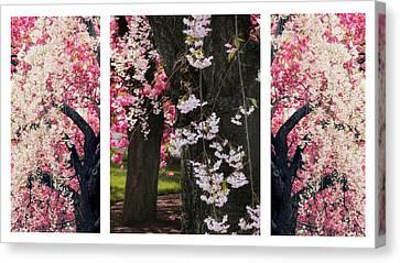 Cherry Blossom Triptych Canvas Print