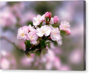 Cherry Blossom Whispers Canvas Print by Jessica Jenney