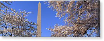 Cherry Blossoms And Washington Canvas Print by Panoramic Images