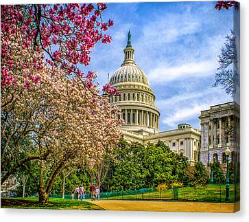 Cherry Blossoms At The Capitol Canvas Print