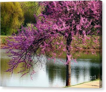 Cherry Blossoms By The Pond Canvas Print by Sue Melvin