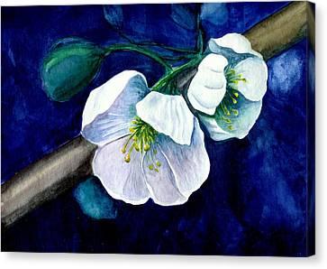 Cherry Blossoms Canvas Print by Georgia Pistolis