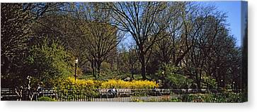 Cherry Blossoms In A Park, Riverside Canvas Print by Panoramic Images