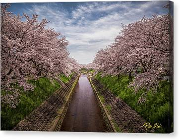 Canvas Print featuring the photograph Cherry Blossoms In Nara by Rikk Flohr