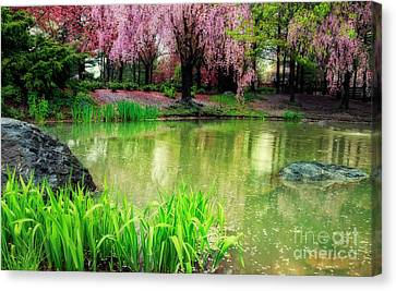 Rain Of Pink Cherry Blossoms Canvas Print by Charline Xia
