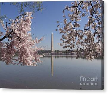 Cherry Blossoms Monument Canvas Print by April Sims