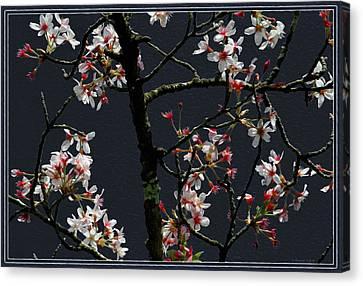 Cherry Blossoms On Dark Bkgrd Canvas Print