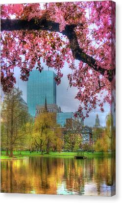 Canvas Print featuring the photograph Cherry Blossoms Over Boston by Joann Vitali