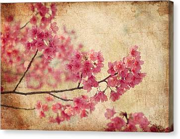 Flower Canvas Print - Cherry Blossoms by Rich Leighton