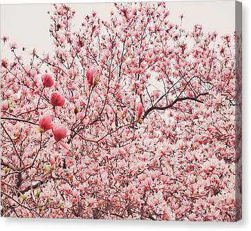 Cherry Blossoms Canvas Print by Vivienne Gucwa