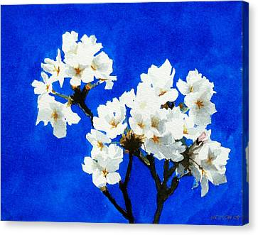 Cherry Blossoms Canvas Print by William  Nelson