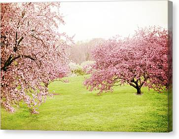 Canvas Print featuring the photograph Cherry Confection by Jessica Jenney