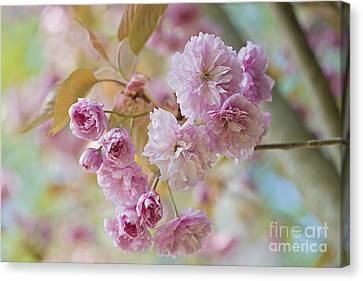 Close Focus Floral Canvas Print - Cherry Delight by Jacky Parker