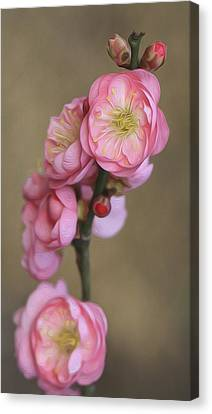 Cherry Flower Canvas Print