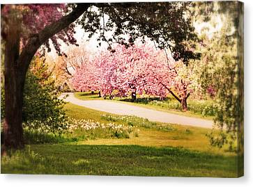 Cherry Hill Grove Canvas Print by Jessica Jenney