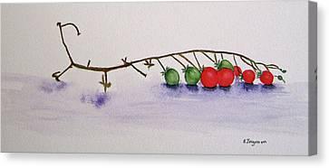 Cherry Tomatoe Vine Canvas Print