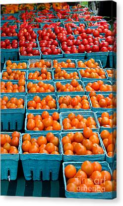 Cherry Tomatoes Canvas Print by Jennifer Booher