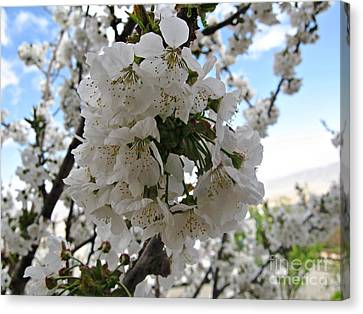 Canvas Print featuring the photograph Cherry Tree by Cendrine Marrouat