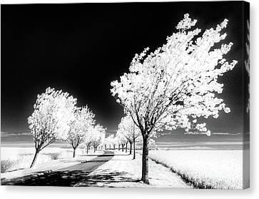 Cherry Tree Grove Wolds Way Huggate Canvas Print by Janet Burdon
