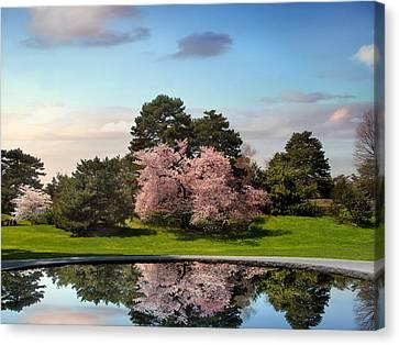 Cherry Tree Reflections Canvas Print by Jessica Jenney