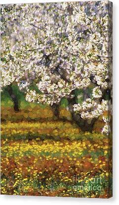 Cherry Trees And Flowers Canvas Print by Robert Brown