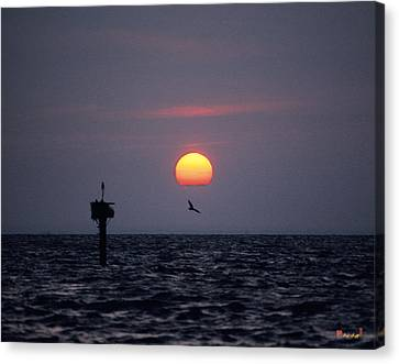Canvas Print featuring the photograph Chesapeake Bay Osprey 14o by Gerry Gantt