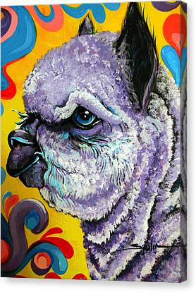 Cheshire Alpaca  Canvas Print by Patty Sjolin