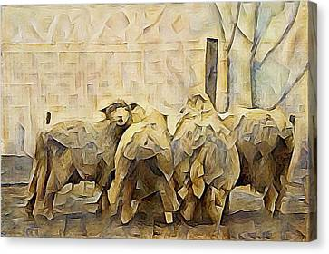 Chester County Sheep Canvas Print