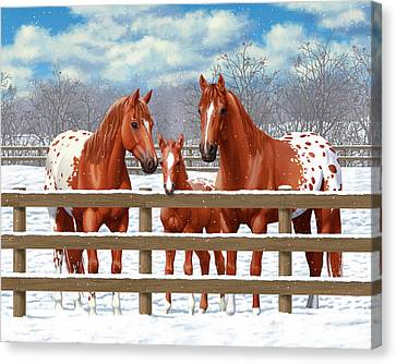 Chestnut Appaloosa Horses In Snow Canvas Print by Crista Forest
