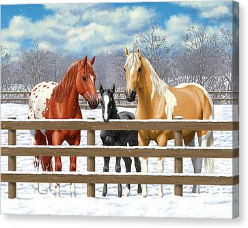 Chestnut Appaloosa Palomino Pinto Black Foal Horses In Snow Canvas Print by Crista Forest