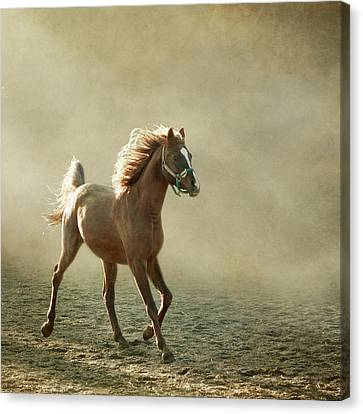 Chestnut Arabian Horse Canvas Print by Christiana Stawski