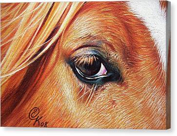 Chestnut Close-up Canvas Print by Elena Kolotusha